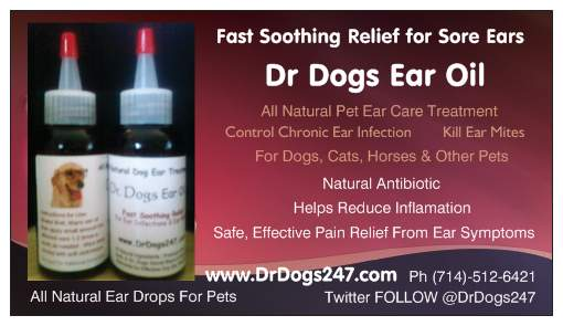 Dog Ear Infection Medication